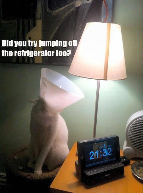 Cat Lamp Jump Refrigerator Funny Joke Pictures