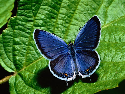 Beautiful Butterfly Normal Resolution Wallpaper 13