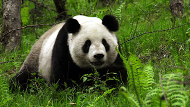 """""""ONG IDESAM (Instituto em Defesa da Educação Sócio Ambiental)"""