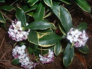 7 Bunga Cantik Mengandung Racun Mematikan [ www.BlogApaAja.com ]