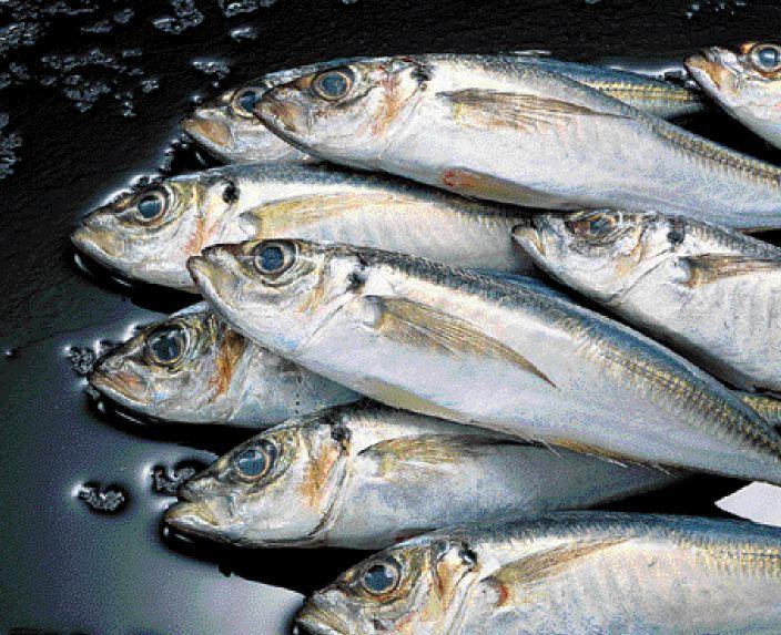 Μικροτσίπ σε ψάρια του ποταμού νέστου