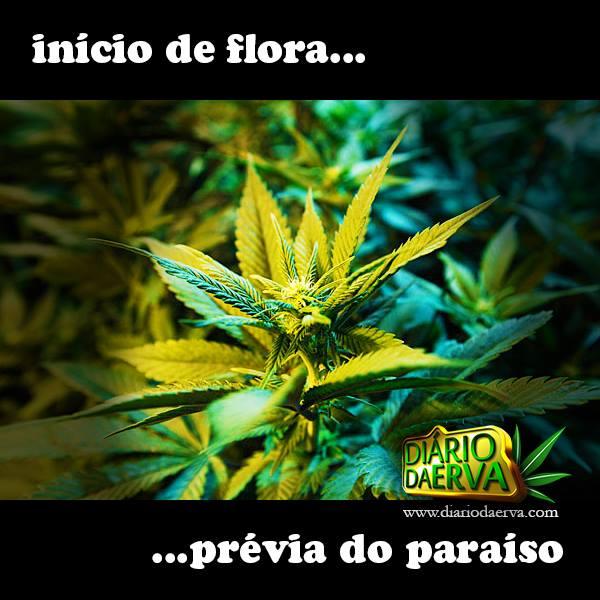 Início de flora....... Prévia do Paraíso.. quem compartilha desta emoção, curte e compartilha!