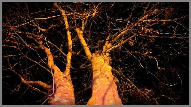 Invierno noche frío, 2013 Abbé Nozal