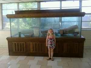 Giant Aquariums Approx 400 Gal