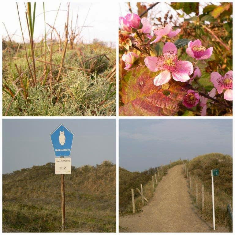 Wochenende Winter Urlaub Insel Meer Nationalpark Gras Strand Sand Weg Ostland