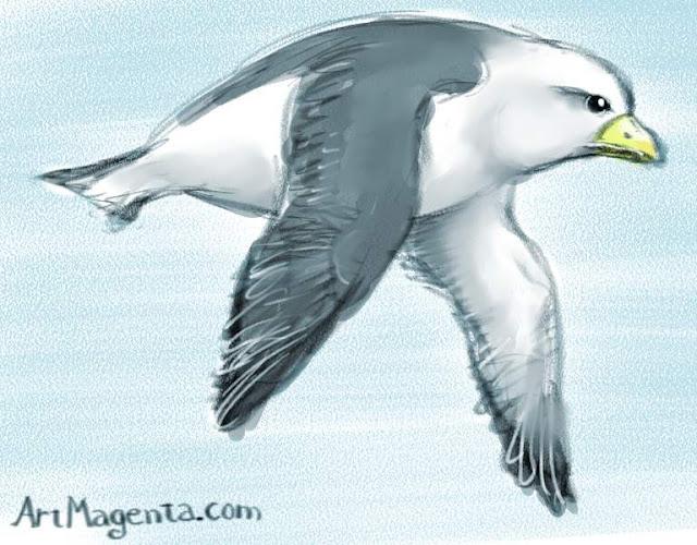Fulmar, a bird drawing by Artmagenta