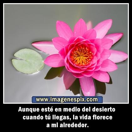 Mensaje de feliz cumpleaños con imagen de flores | Frases