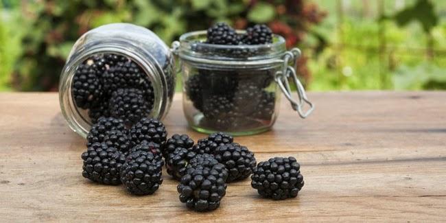 4 Manfaat Buah Mulberry (Bebesaran) yang Membuat Kulit Anda Semakin Cantik