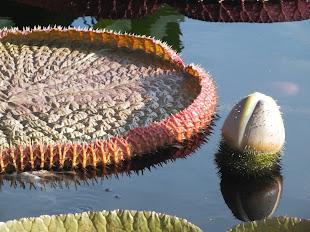 Longwood Water Garden