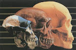 La Enfermedad de la Evolución del Aparato Masticatorio Humano: