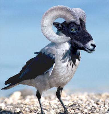 Animales increíbles V (13 Fotomontajes en Photoshop)