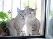 Nika y Rony