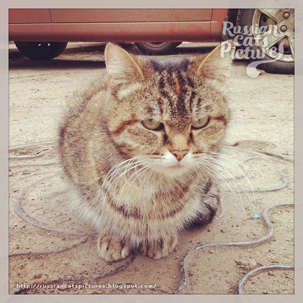 Sad Instacats Cat 10