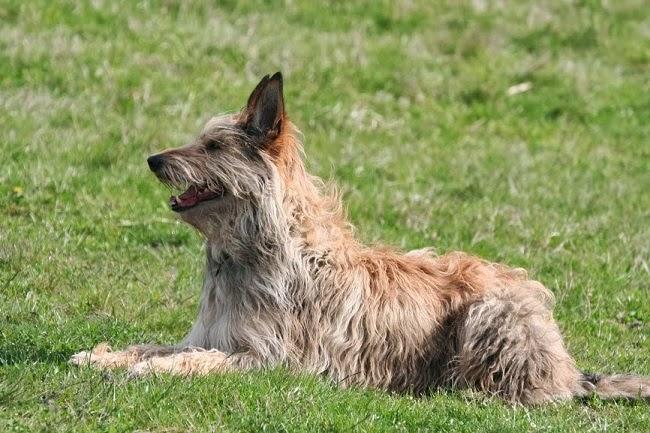 Wzmocnienie naturalnej odporności psa