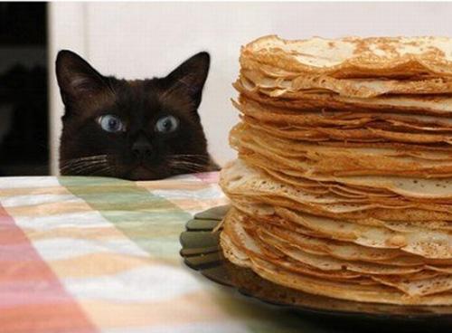 Las fotos más divertidas de gatos