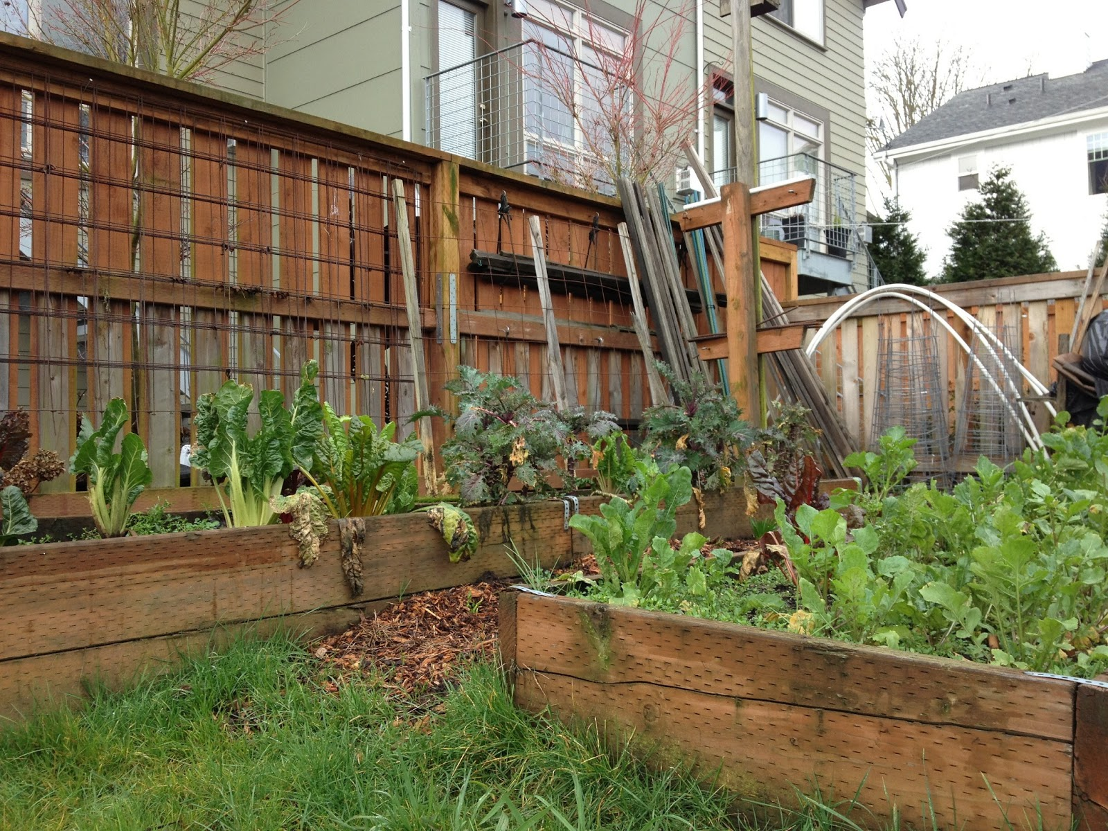 Lettuce Link: Growing and Giving: A Gratifying Experience
