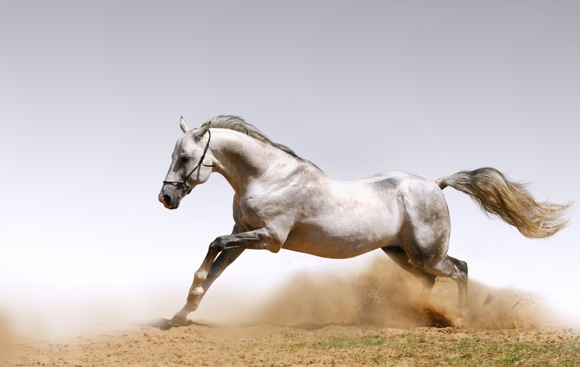 Horses Photo Art Wallpaper 04
