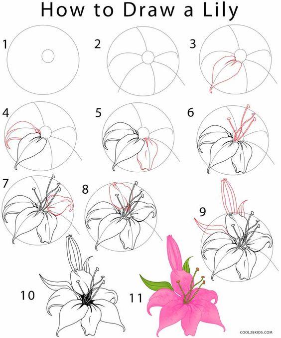 Как нарисовать лотос поэтапно для начинающих