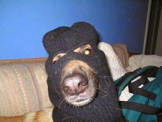 собака банкоограбляка