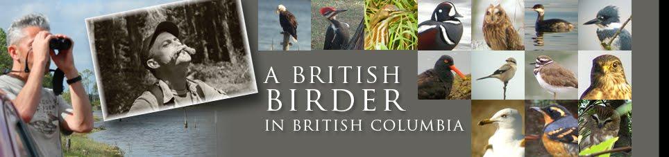 Birding Vancouver Island: A Brit birder in BC, Victoria & Nanaimo