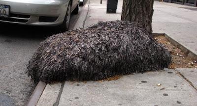 monstruo peludo aparece en nueva york