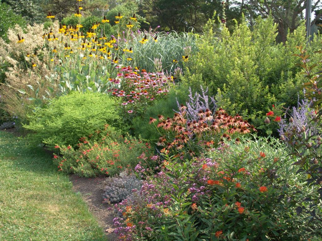 The garden plot for the love of birds in your backyard for Native plant garden designs