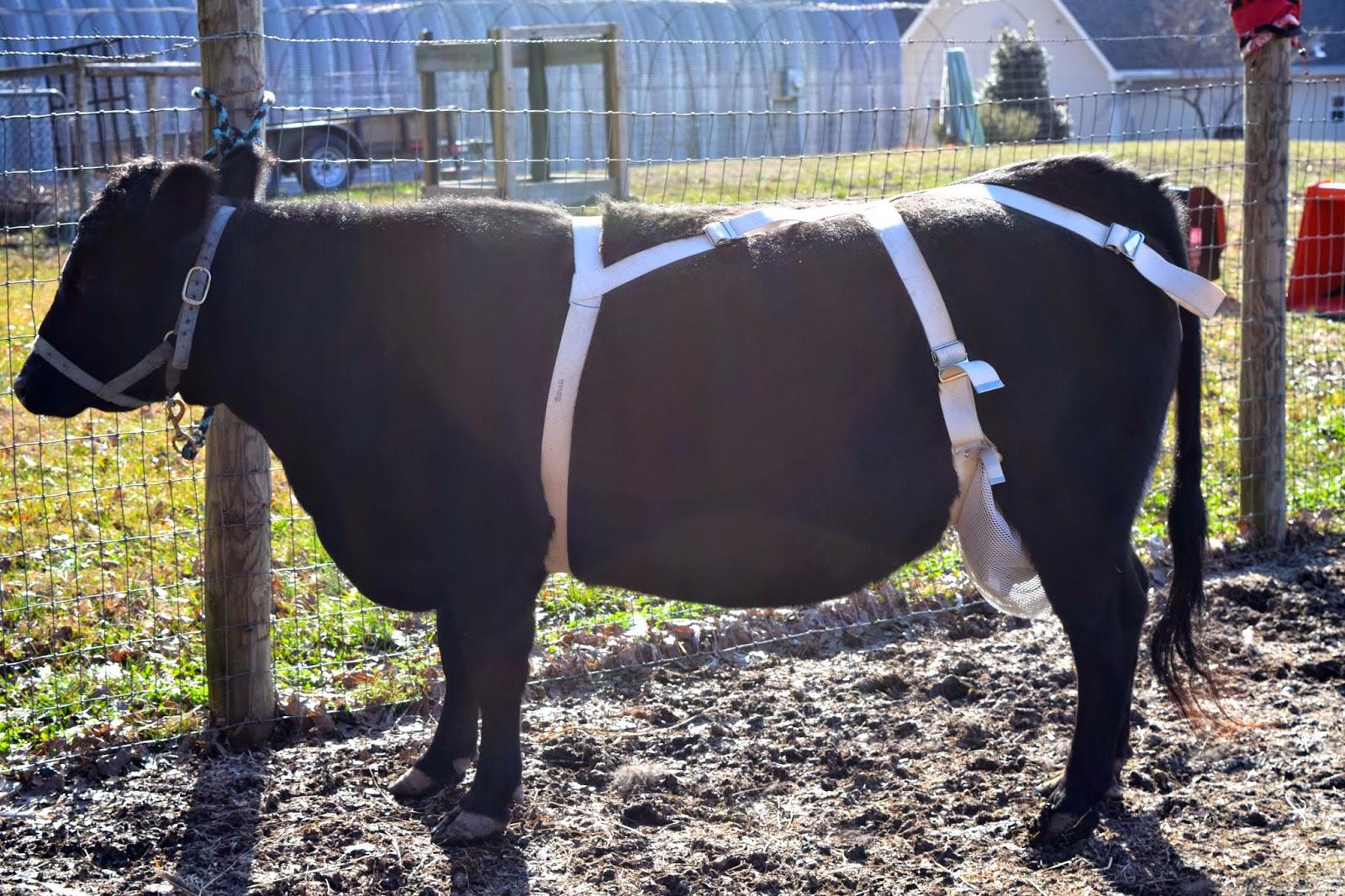Adventures on Zephyr Hill Farm: March 2015