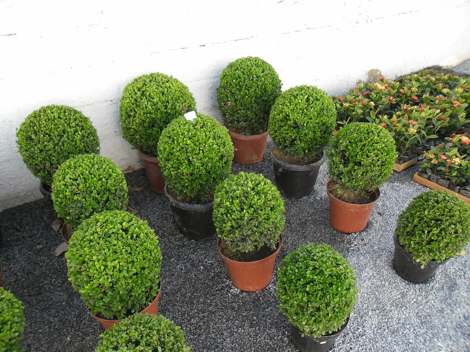 da Jardinagem Plantas e acessórios para compor jardim externo
