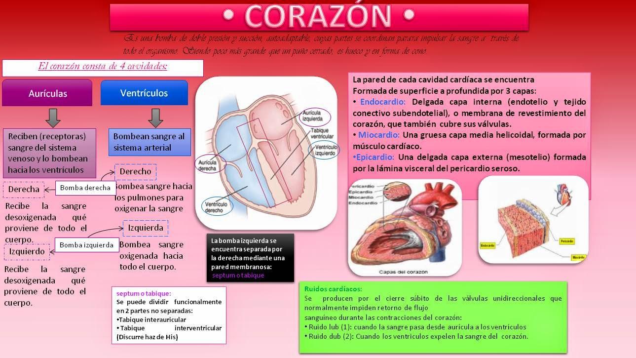 Blog de evidencias de Fisiología Médica de Evelyn Roxana ...