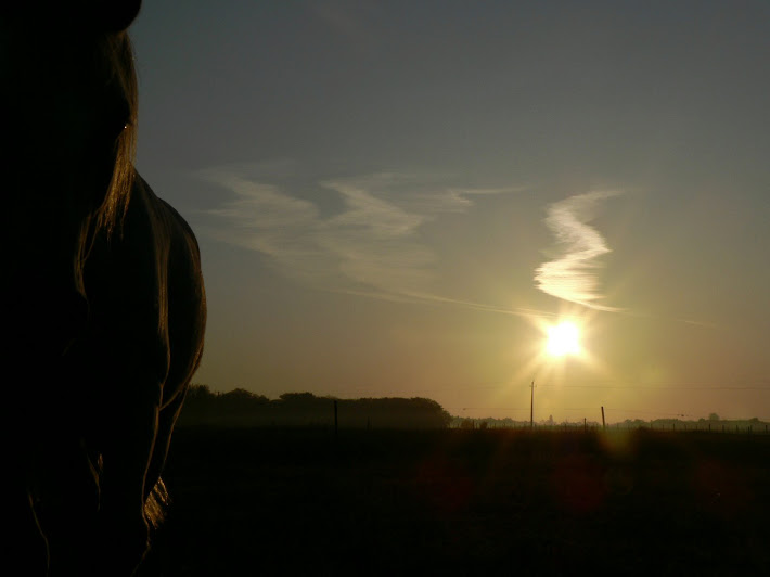 huge white horse at sunrise