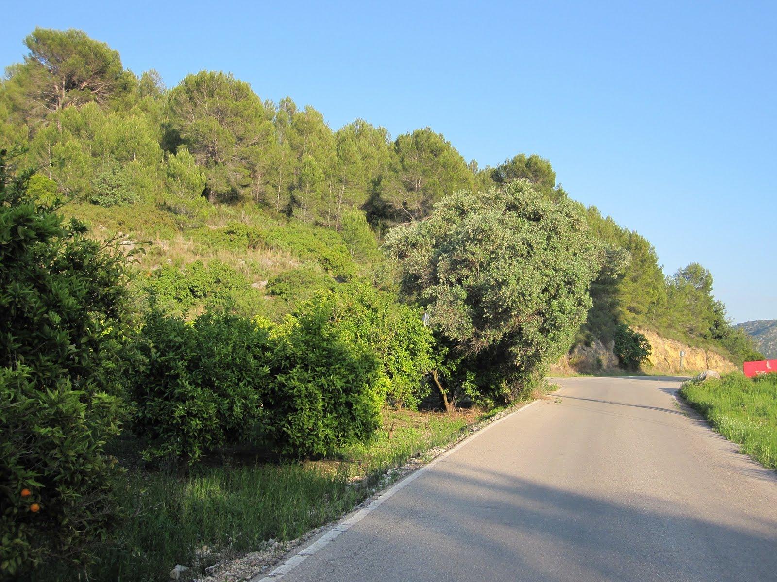 Camí de la Via i Muntanyeta de la Creueta, Marjal de Xeresa