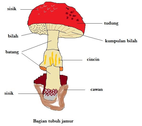 Bagian Tubuh Jamur