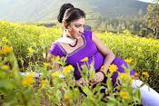 Hari priya photo shoot among yellow folwers-thumbnail-7