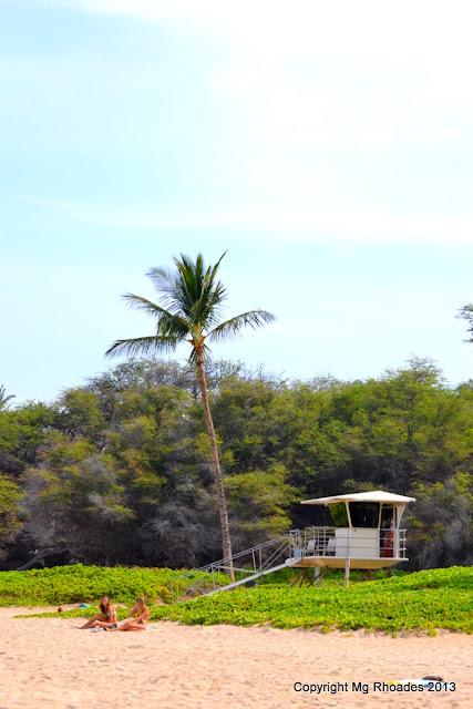 Big Island of Hawaii Palm Trees and Ocean Breezes