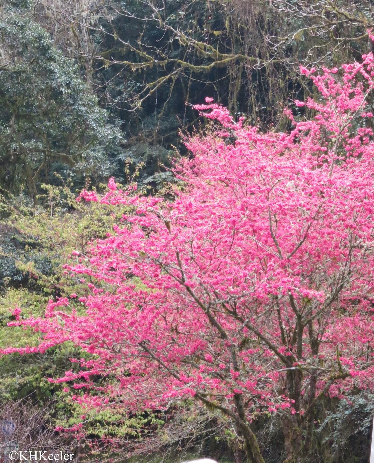 plums Taiwan