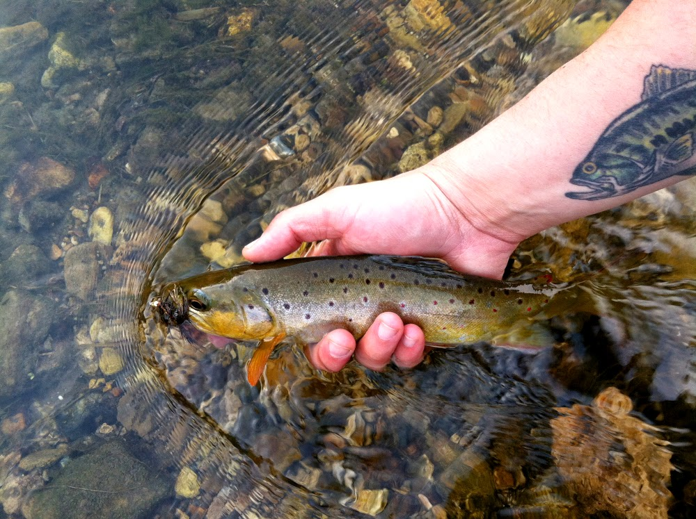 Illinois wisconsin fishing a driftless trout fishing blog for Trout fishing wisconsin