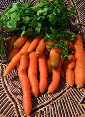Carrots and Cilantro in a Basket