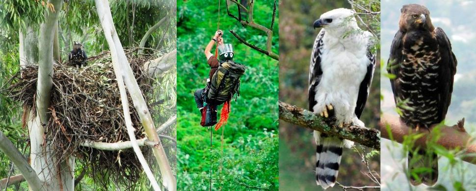 Crowned Eagle Research in KwaZulu-Natal