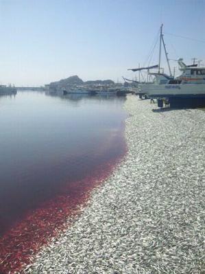 Muerte de sardinas
