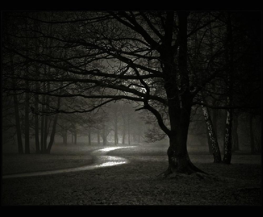 Darkness Love Werewolf-forest-night-dark