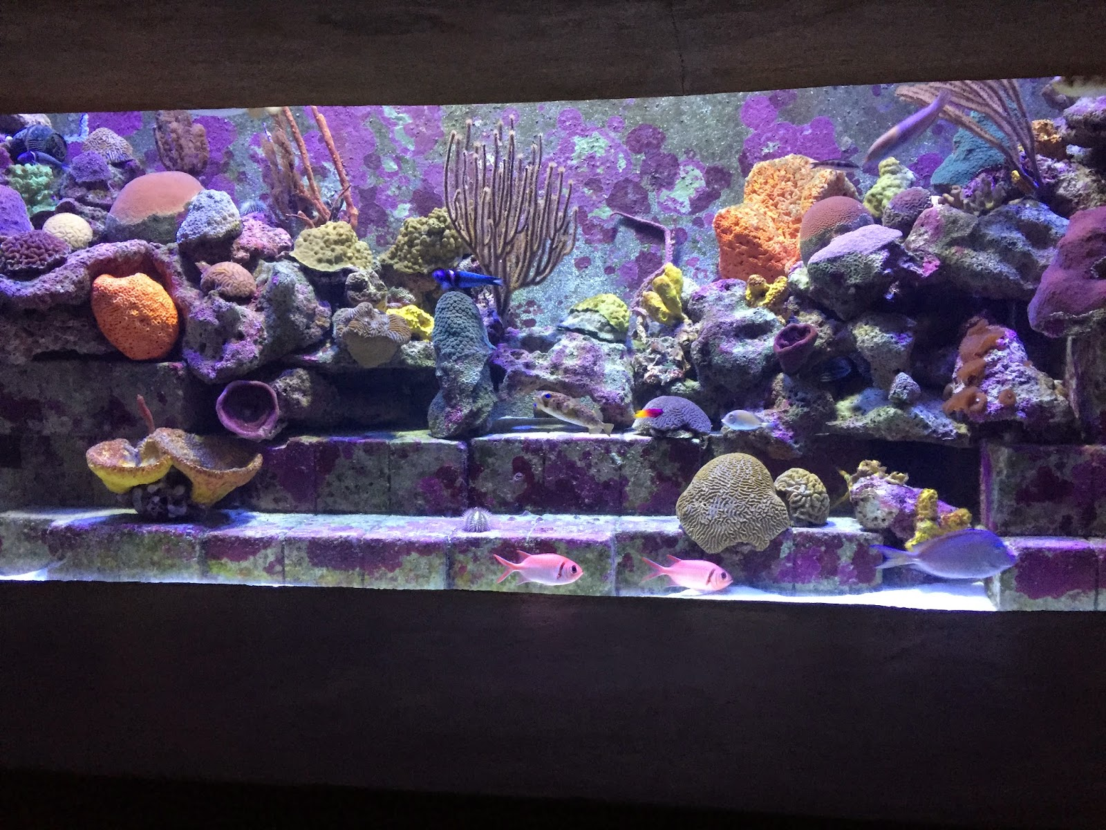 Beautiful Aquarium Colors