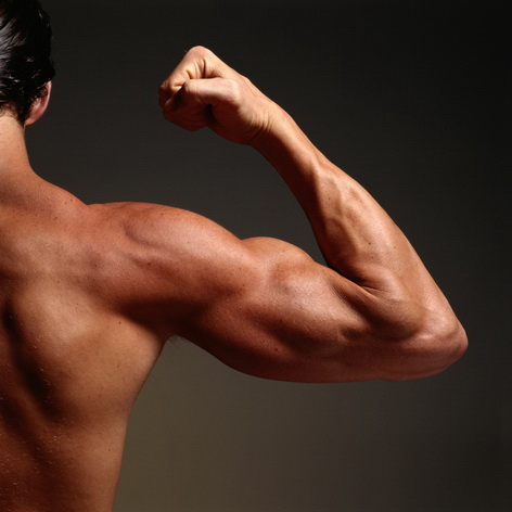 muscle strength and size relationship