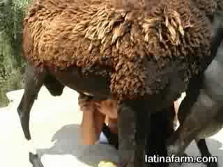Подборка секса с животными
