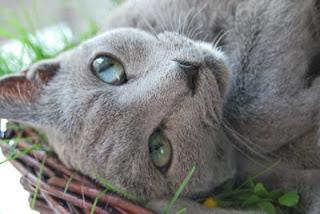Lucynka - moja niebieska pomocnica