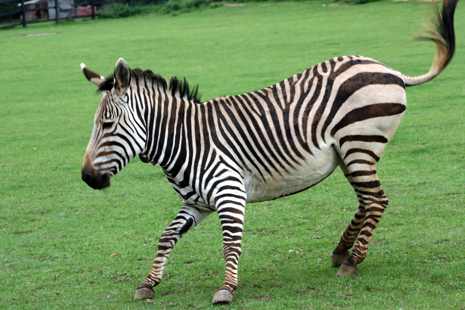 facts and information about zebras African animals list with pictures & facts for kids see the wildlife of africa, home of some of the world's most famous species with printable worksheet.