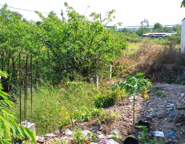 ngăn chặn phân lô bán nền đất thành phố hồ chí minh