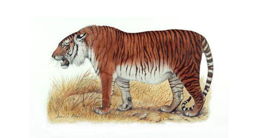 Most Amazing Extinct Land Animals Caspian Tiger