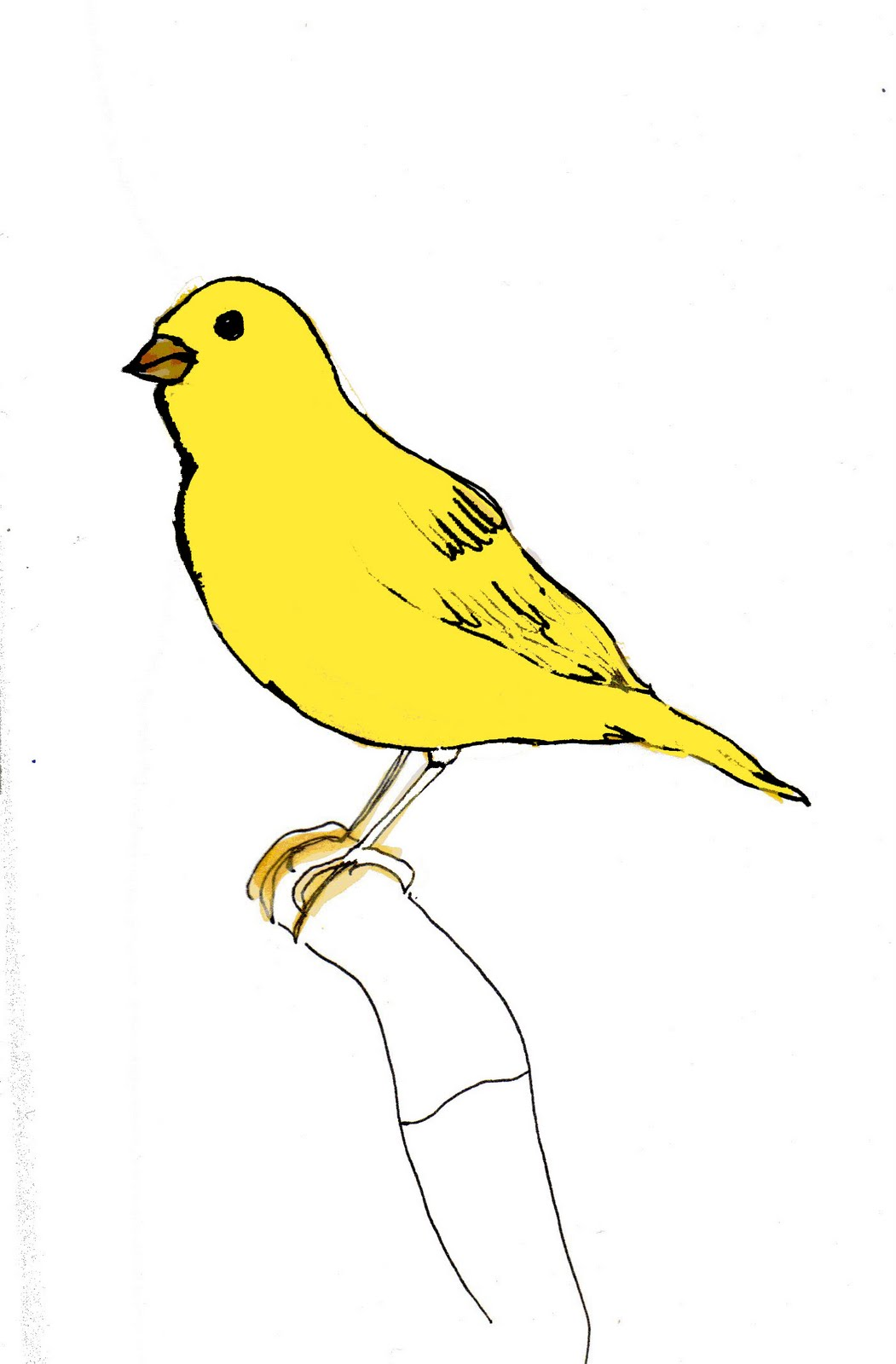 Canary Drawing Labels: canary, drawing