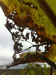 Vinblonder