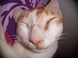 Kucing Penghilang Stress